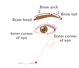 What are beautifully balanced eyebrows?
