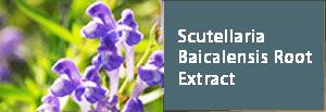 Scutellaria Baicalensis Root Extract